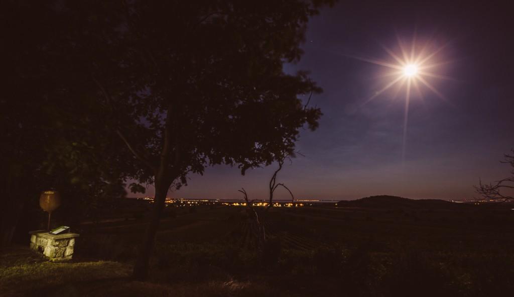 Kirschbluetenweg_Nacht_0001