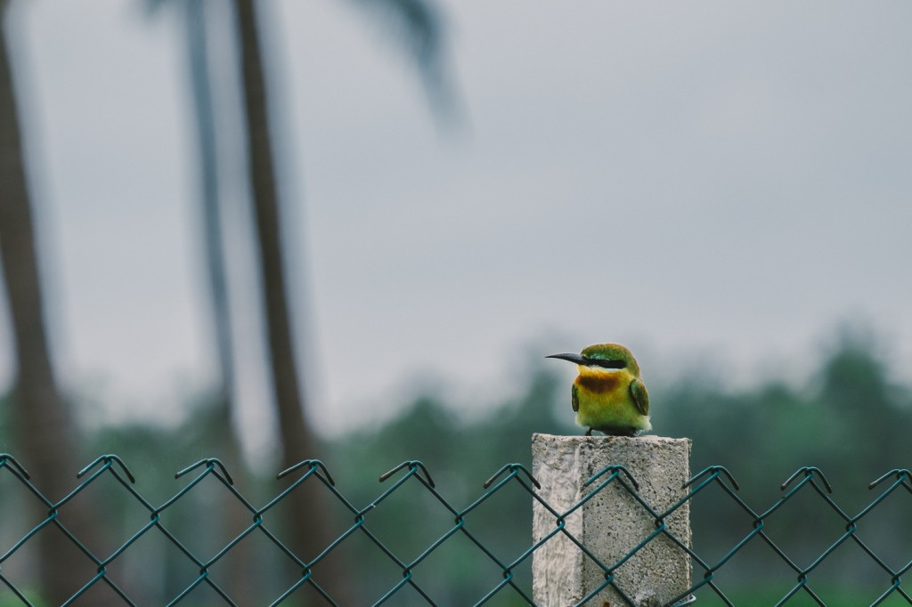 SriLanka_0109
